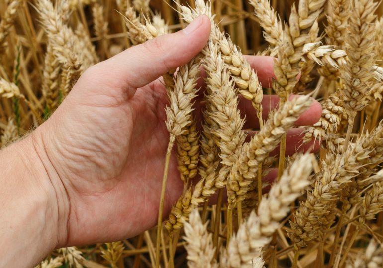 ТОП-10 хозяйств – лидеров по урожайности озимых зерновых