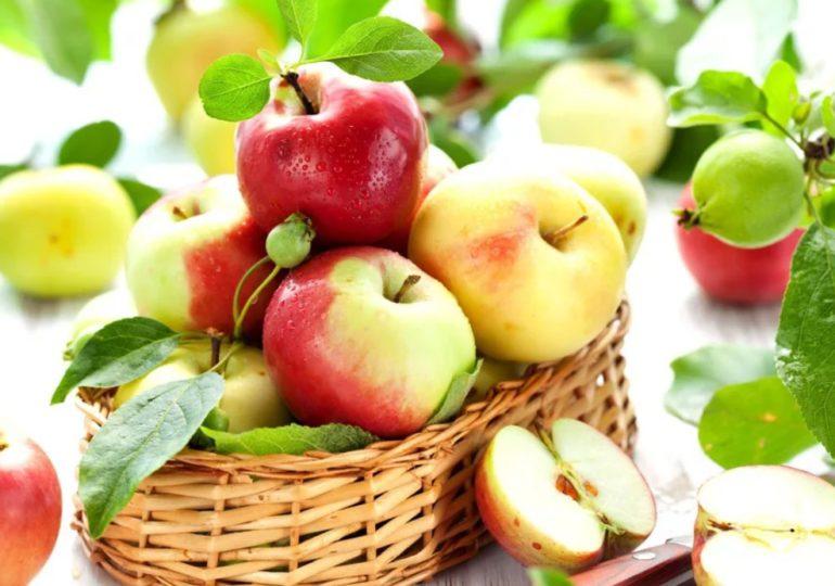Яблочный спас на холсте