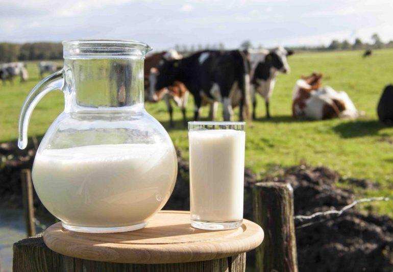 Оренбургские предприятия приглашают поучаствовать в онлайн-конференции по развитию молочной отрасли