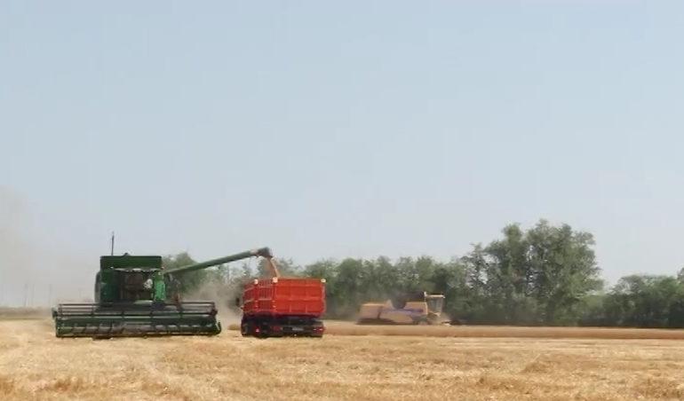 Время собирать урожай
