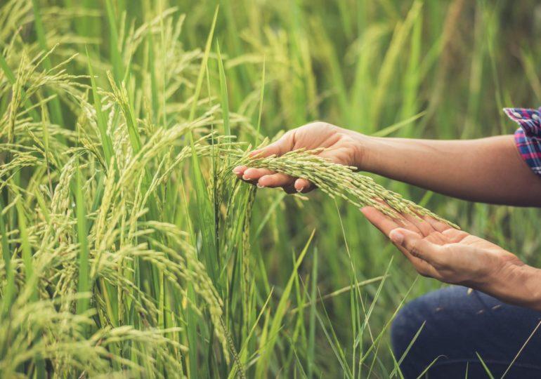 Правительство России окажет дополнительную поддержку земледельцам